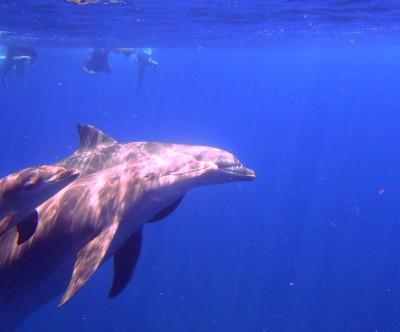 dauphins-saintes-2013