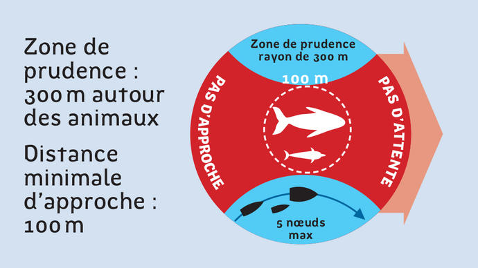 approche mamiferes marins
